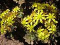 Yellow Flowers2.jpg