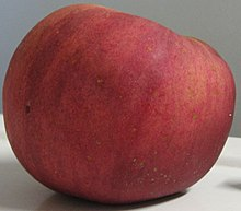 A 'York Imperial' apple, red with green streaks