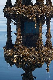 Zebra mussel-encrusted Vector Averaging Current Meter from Lake Michigan