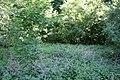 Zegartowice park dworski 2012 05 24 fot K Lewandowski 0470.JPG
