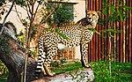Zoo de Lisboa by Juntas 73.jpg