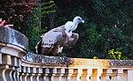 Zoo de Lisboa by Juntas 8.jpg