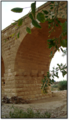 Zzz- צמחייה בסמוך לגשר הטורקי.png