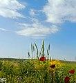 (((گلهای بهاری مراغه ))) - panoramio (3).jpg