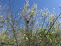 ^^ بهار در کاج^^ - panoramio.jpg