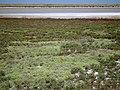 Арабатская стрелка у базы Валок - panoramio.jpg
