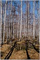 Весна на Южном Урале. - panoramio (1).jpg