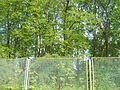 Дерева Ботанічного саду.JPG