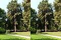 Кисловодск. Кедр с царской поляны (X-3D stereo). 22-09-2010г. - panoramio.jpg