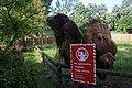 Київський зоопарк Бактріан IMG 3356.jpg