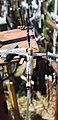 Литва Гора крестов (маленький Иисус на маленьком кресте) - panoramio.jpg