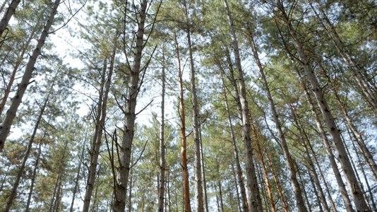 File:Лісосмуга біля Олешківських пісків.webm