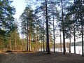 Озеро Верхолино. - panoramio.jpg