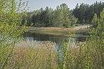 Озеро и камыши.jpg
