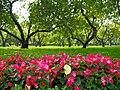 Парк Коломенское 7.jpg