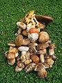 Печурке, Шарани.jpg