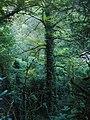 Роща листвы.jpg