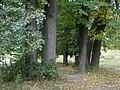 Усадьба Петровское, парк с прудами, липовая беседка 02.jpg
