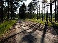 Утром на дороге из Ярославля - panoramio.jpg