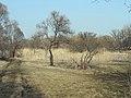 Шебекино - panoramio (4).jpg