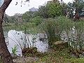 台大生態池 Taida Ecological Pond - panoramio.jpg
