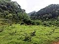 新丰芹菜塘林场越野穿越20150411 - panoramio (36).jpg