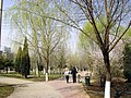 春天来到 - panoramio.jpg
