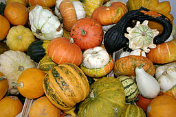 "By User:Nino Barbieri [<a href=""www.creativecommons.org/licenses/by-sa/2.5"">CC-BY-SA-2.5</a>], <a href='http://commons.wikimedia.org/wiki/File:-_Pumpkins_-.jpg'>from Wikimedia Commons</a>"