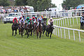 012 Epsom Derby Day 2015 - Investec Private Banking Stakes - field at Tattenham corner (18403462499).jpg