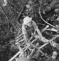 013856 FO climbing tree to OP Gona.JPG