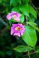 01388 - Trail Flower (49497219258).jpg
