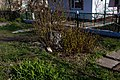 05-210-5006 залишки лип Мішо.jpg