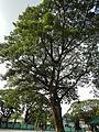 07890jfCamposanto Park Raymond Nonnatus Church Parish Moncada Tarlacfvf 05.JPG