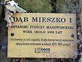 090716 - Mieszko Oak - 05.jpg