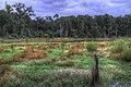 15-26-027, wetlands - panoramio.jpg