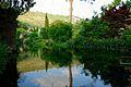 150510 183028 Giardino di Ninfa.jpg