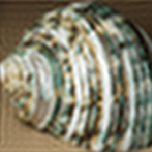 Image scaling - Image: 160 by 160 thumbnail of 'Green Sea Shell' 1. fourier filtered for downsampling to 40 x 40
