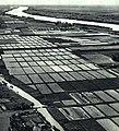1965-4 1965年 洞庭湖.jpg