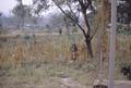 1968 refugee camp 2.png