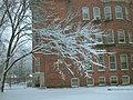 20050105 25 Ice on tree Oak Park-3 (9061138085).jpg