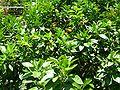 2008 07 Botanical Garden Meran 71880R0475.jpg