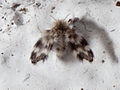2010-06-06 insecto en Brión.jpg