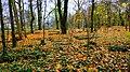 2012- 11. 01 Sępólno Krajeńskie widok starego cmentarza ewangelicko-augsburskiego - panoramio (16).jpg