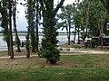 2015-05-21 Mantova, fiume Mincio 12.jpg