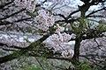 20160403 Himeji-Castle 3414 (26791734476).jpg