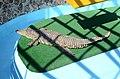 2019. Крокодиловый каньон в Ейске 007.jpg