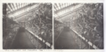 212 - La serre aux Orchidées - Parc de la Tête d'or.tif