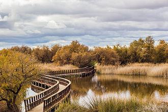 Tablas de Daimiel National Park - Bridge in Tablas de Daimiel National Park