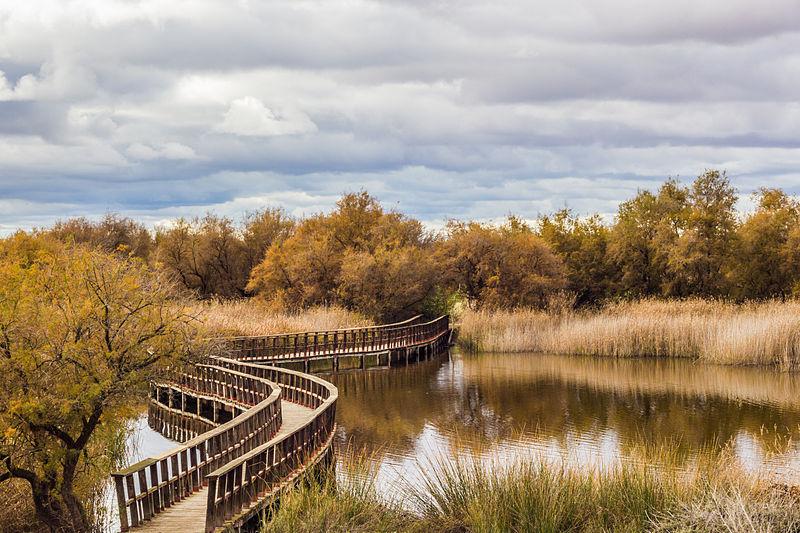 Parque Nacional Las Tablas de Daimiel (España)