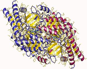 Glutamate-1-semialdehyde 2,1-aminomutase - 2epj, Aeropyrum pernix (Archaea)